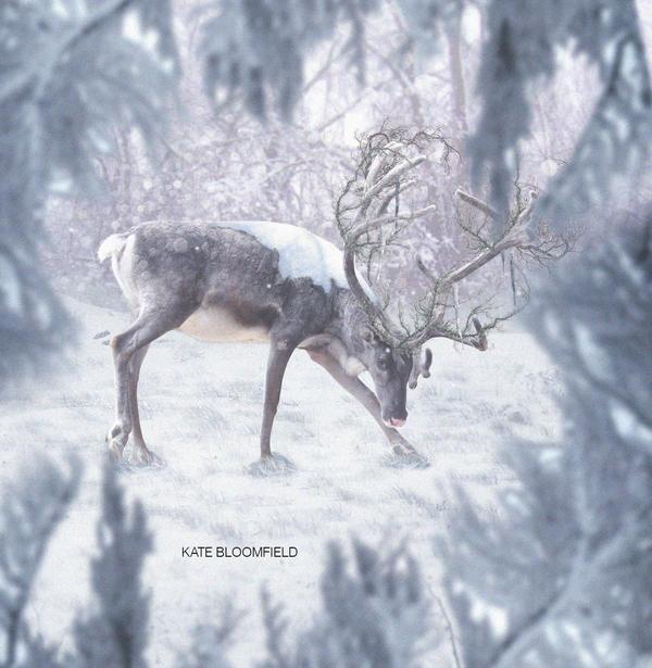 Merry Christmas DeviantArt by KateBloomfield