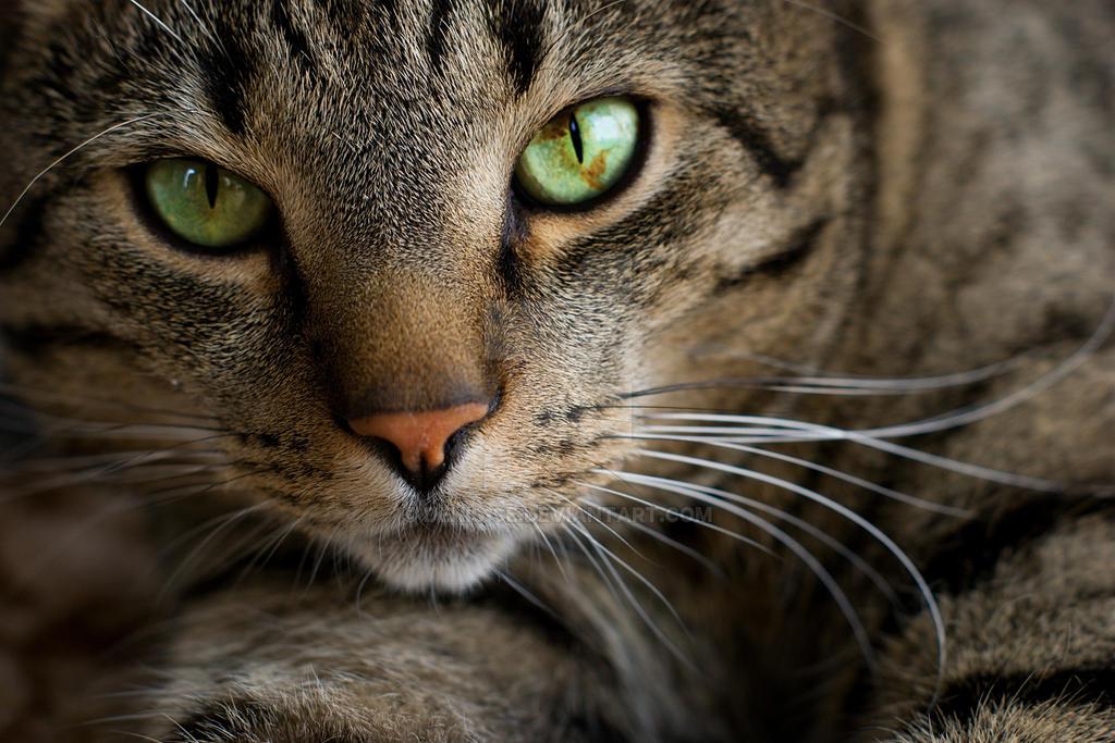 Green Eyes by Denis-se