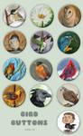 Bird Buttons by Kiriska