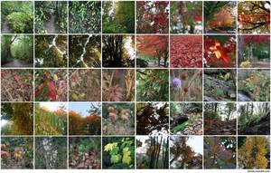 Seattle in Fall