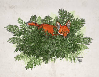 Fox Kit and Ferns