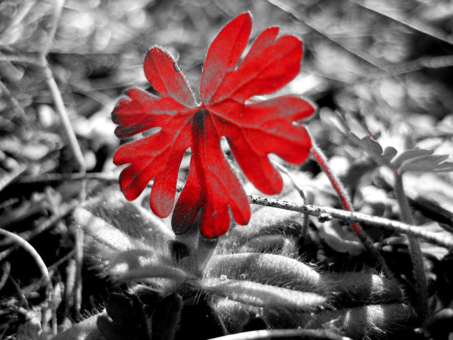 Razbijemo monotoniju bojom - Page 2 Red_by_cmcmurphy