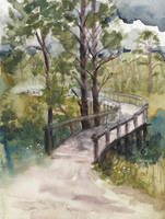 Florida Pines by emera