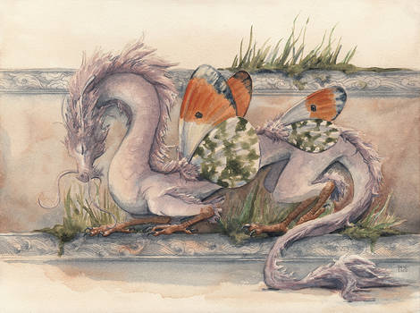 Orange Tip East Asian Dragon