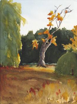 Arboretum Golden Hour