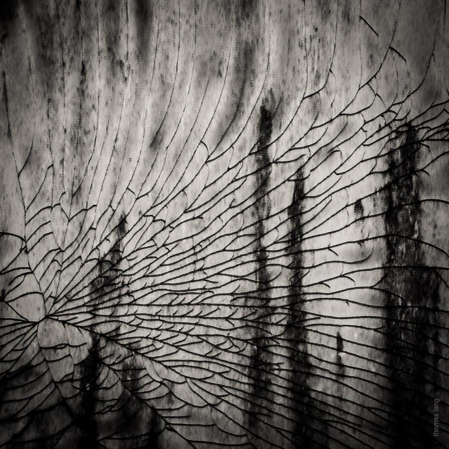 Splintered Veil by tholang