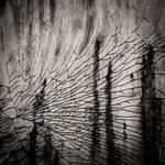 Splintered Veil