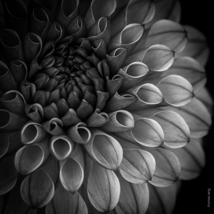 Colourless Beauty by tholang