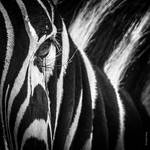 The Lion Never Sleeps by tholang