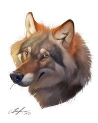 30 min wolf