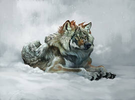 Fluffy winter wolf with video!
