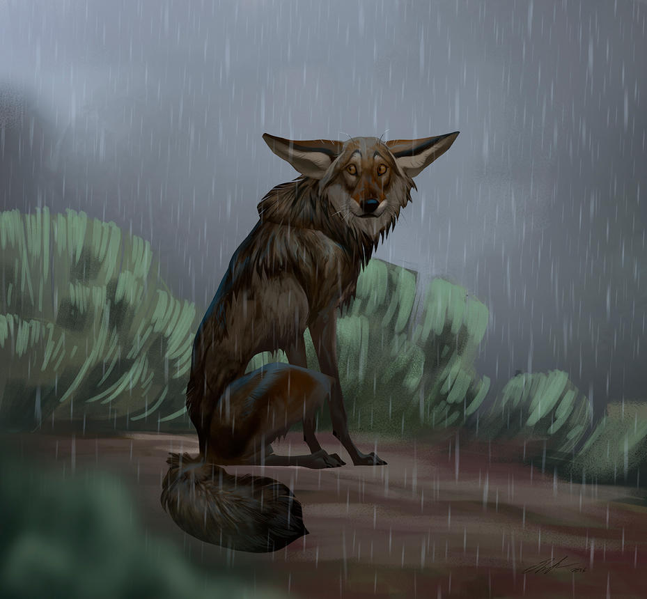 Wet yote by ailah