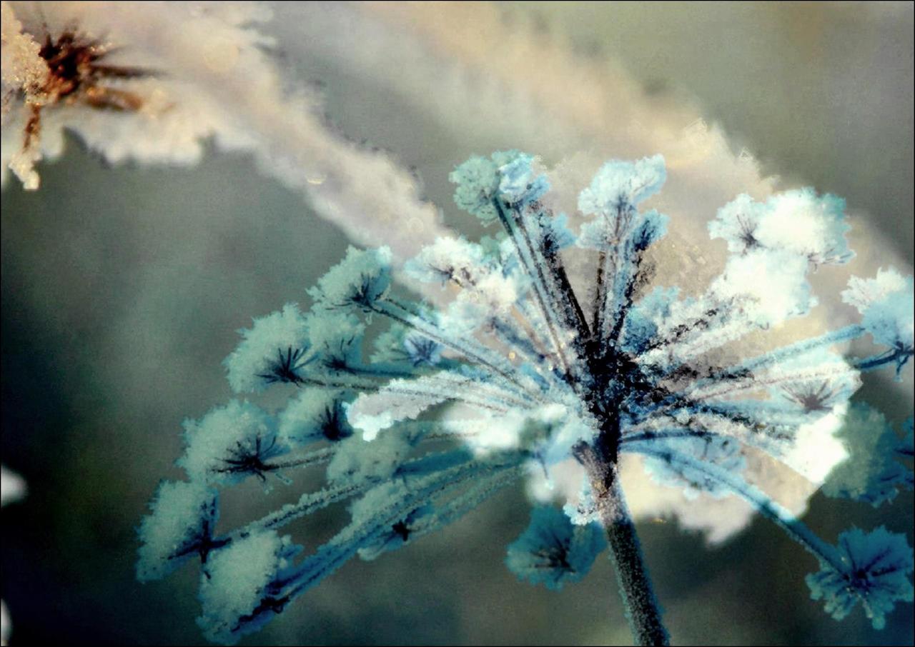 Frozen Flowers In March by eskile on DeviantArt