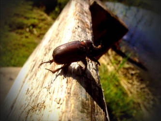 I Thihink This Bug Its An Stag Beatle    by eskile