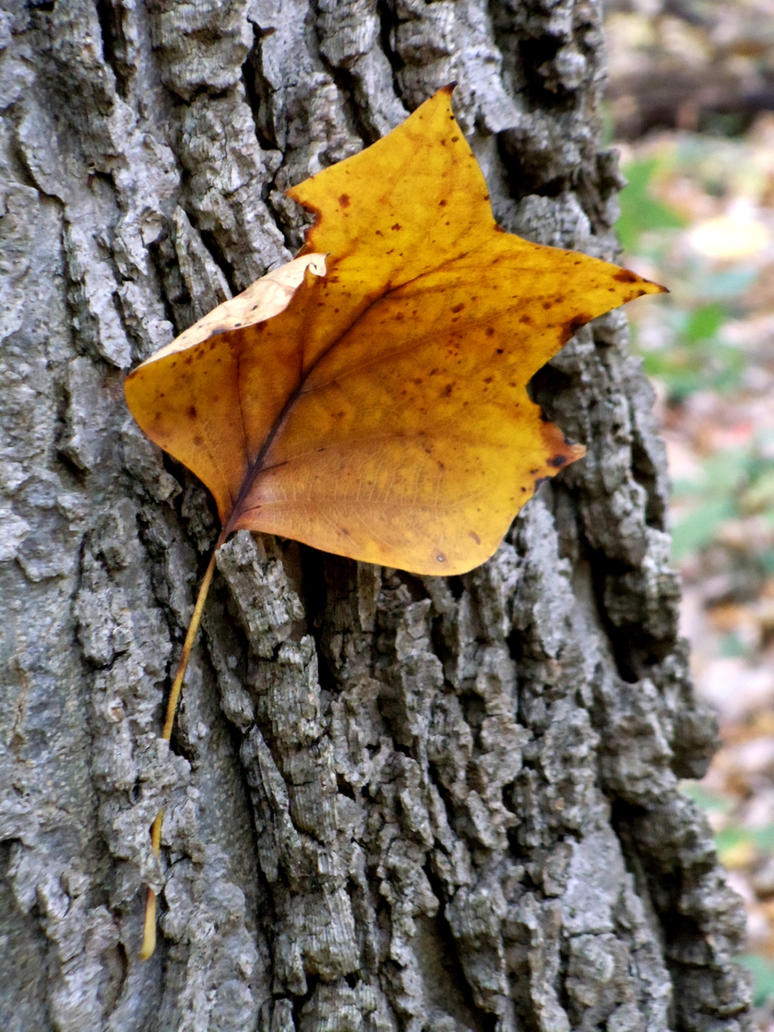Caught in Fall by redxheadxgurl