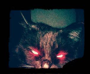 Evil Kitten by ThorShreddington