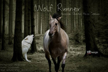 Wolf Runner by Exist-to-Inspire