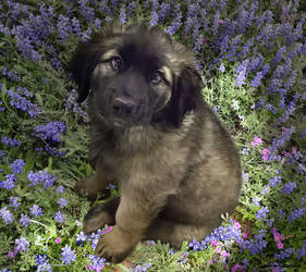 Puppy in the garden by bkhook