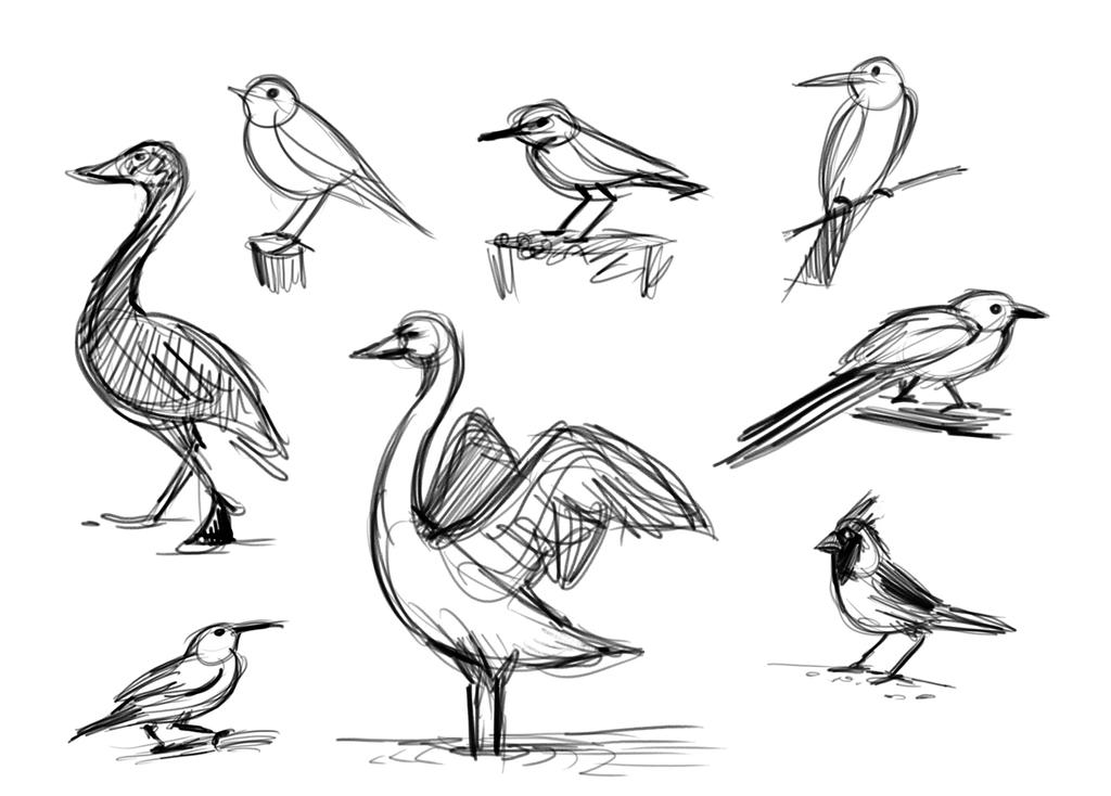 Scribble Gesture Drawing : Gesture drawing birds by brianpitt on deviantart