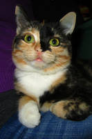 Cute cat by Mari-Ghostly