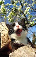sweet yawn by Mari-Ghostly
