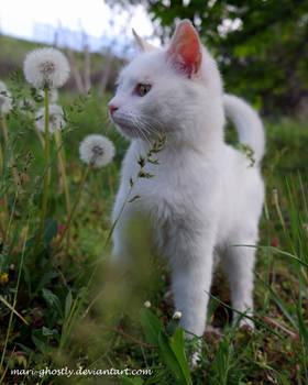 in the dandelions