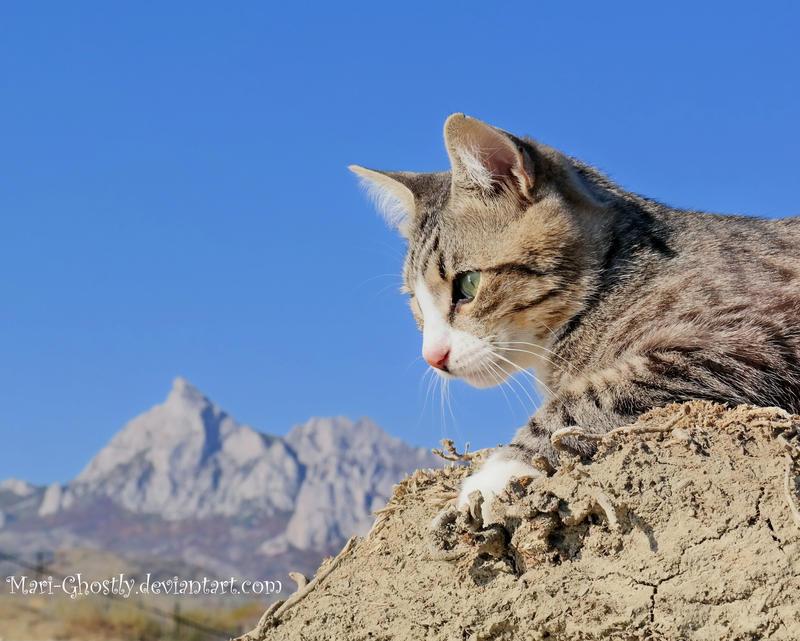 cat Flagman by Mari-Ghostly