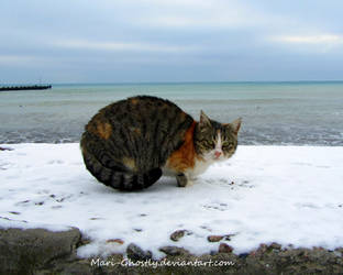 winter - street cat by Mari-Ghostly