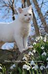 cat in snowdrops