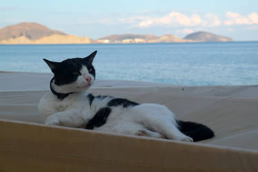 cat in the resort