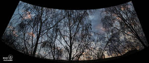 Winter. Clouds. Birches. Panorama.