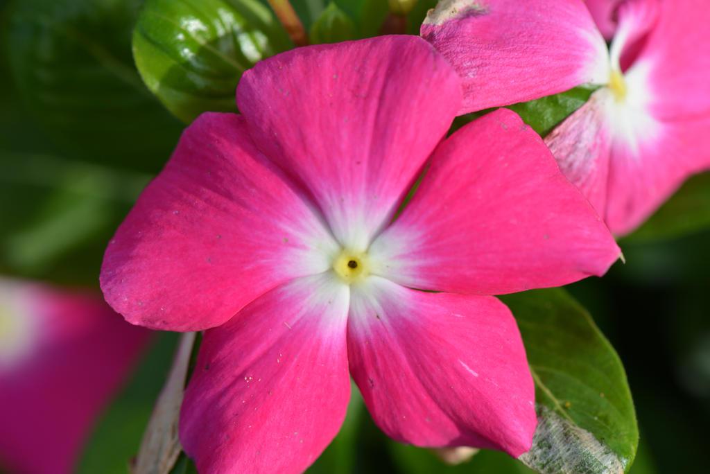 Fleur Rose Et Blanche : fleur rose et blanche by aneede on deviantart ~ Dallasstarsshop.com Idées de Décoration