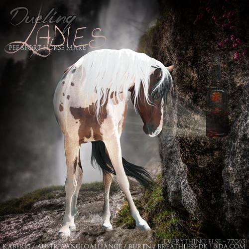 Dueling Ladies by Amurath-Equine