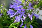 purple. by helloashleeeee