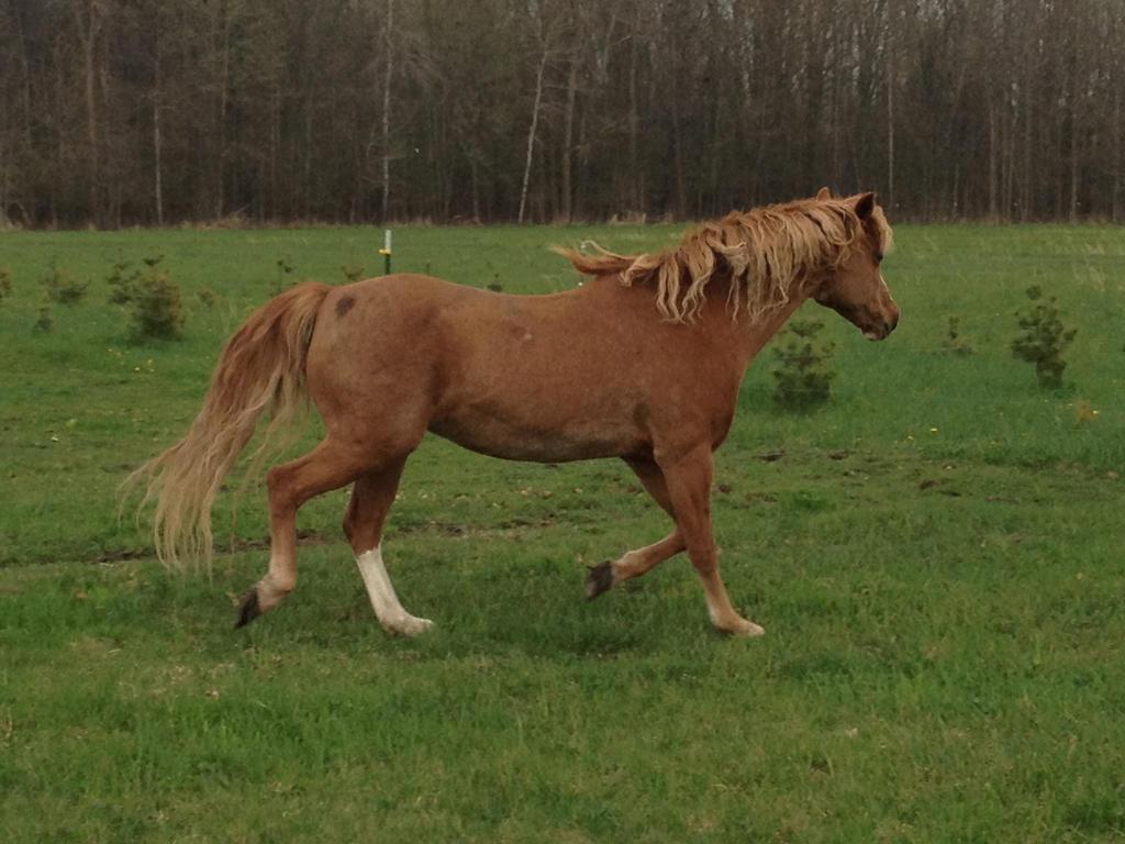 Miss Pony by ArrsistableStock