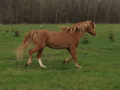 Miss Pony