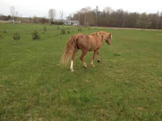 Miss Pony 2