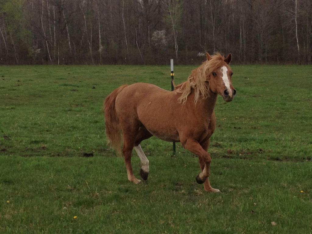Miss Pony 2 by ArrsistableStock