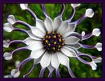 .:fun flower:. by ariseandrejoice