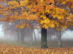 Mist in the Maples by ariseandrejoice