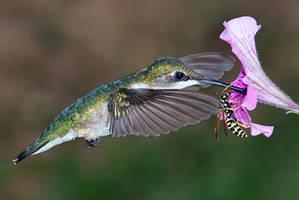 nectar wars by ariseandrejoice