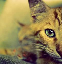 cat by Teadybear1