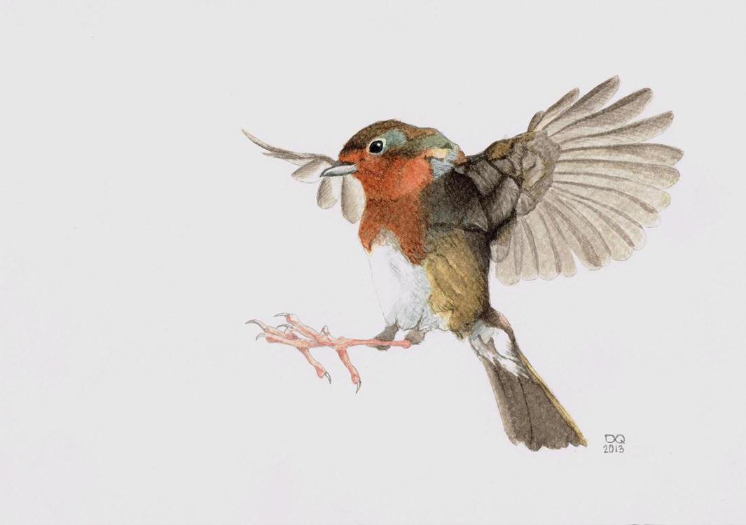 Watercolor birds flying