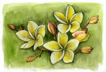 Plumeria by laurenmegan-art
