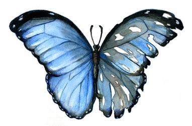 Blue Morpho: Duality by laurenmegan-art