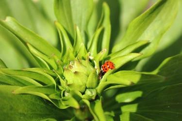 Ladybug chilling