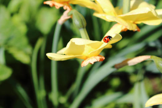 Ladybug relaxing in the sun