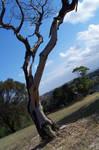 Tree Stock 1