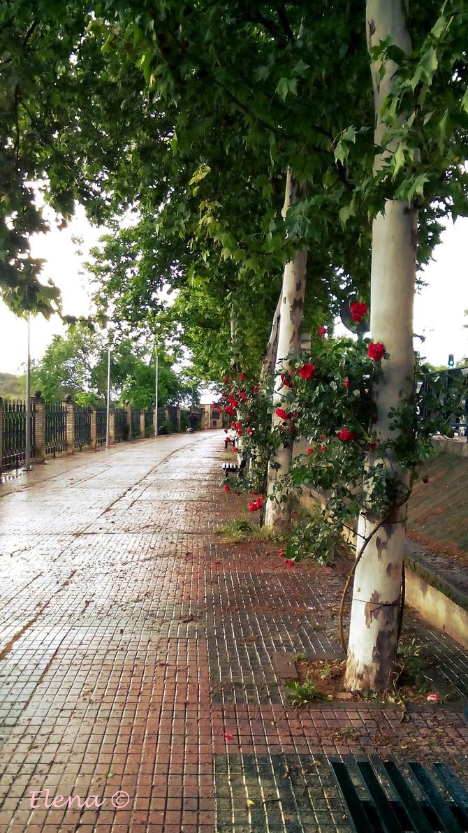 Summer rain by florpurpura