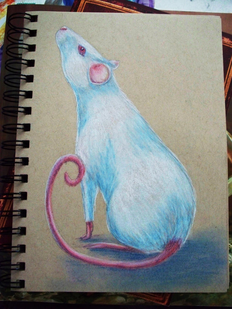 Charcoal Rat by Oreramar